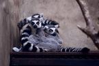沈阳动物园开设暖房 动物温暖过冬