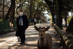 日本游客减少 奈良小鹿上街觅食