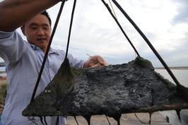 渤海溢油事故四周年