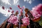 玫瑰收获季 土耳其妇女穿传统服饰采摘