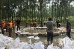 洪水直击|安徽淠河堤坝险象环生 军民合力抢堵管涌