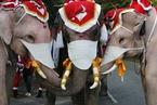 泰国大象充当圣诞老人给路人送口罩