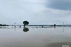 河南秋粮受灾9% 小麦已收获影响较小
